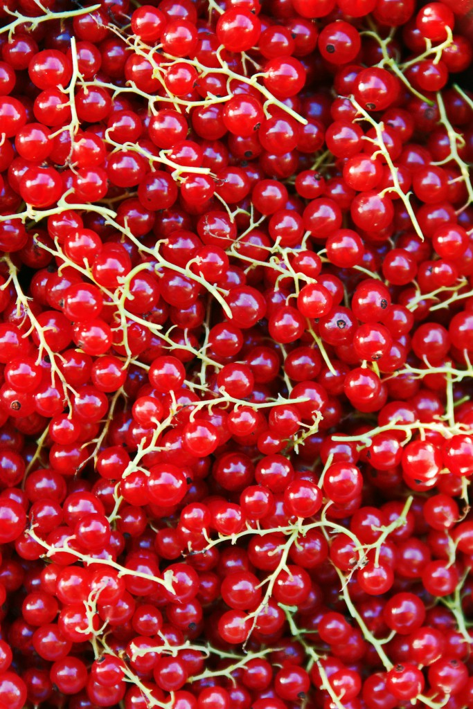 Red Currants | HungryHeart.se
