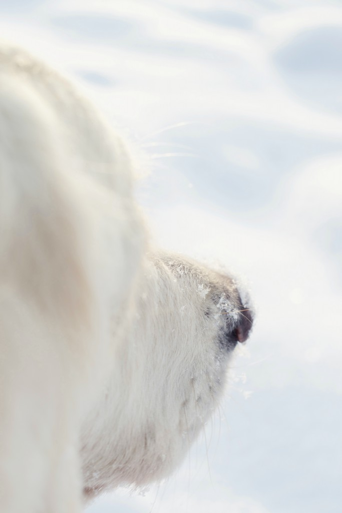 Snowy dog nose | Hungry Heart
