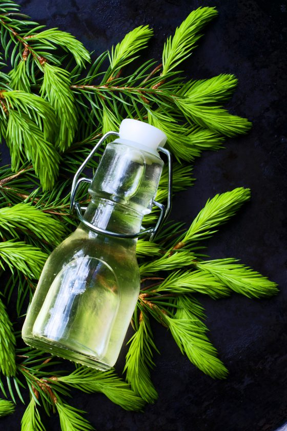 Spruce Tip Syrup Recipe | HungryHeart.se