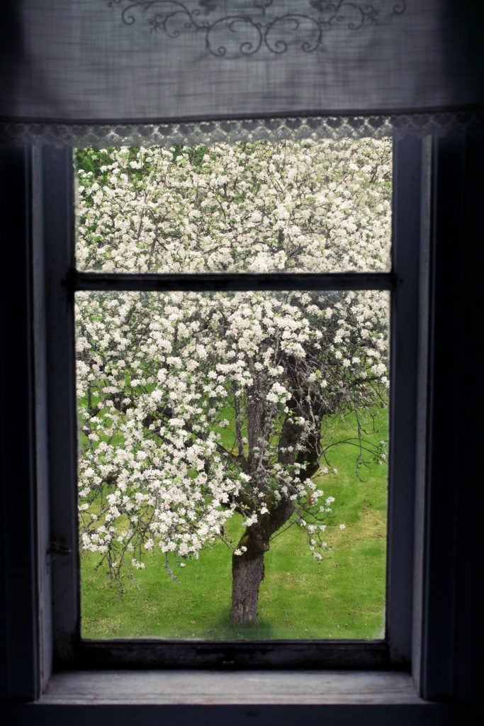 Apple tree seen through a window | HungryHeart.se