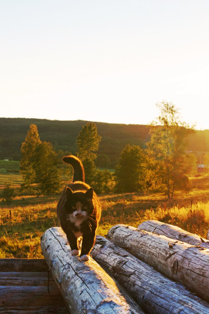 Cat + sunset | HungryHeart.se