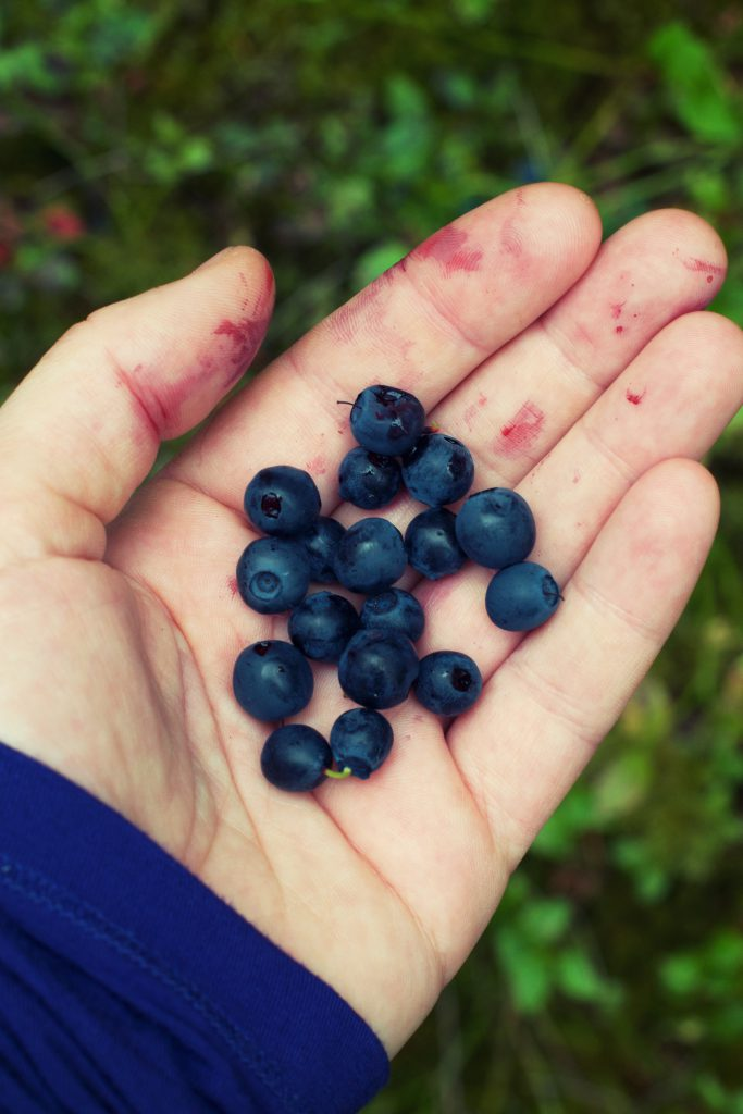 Blueberries | Hungry Heart