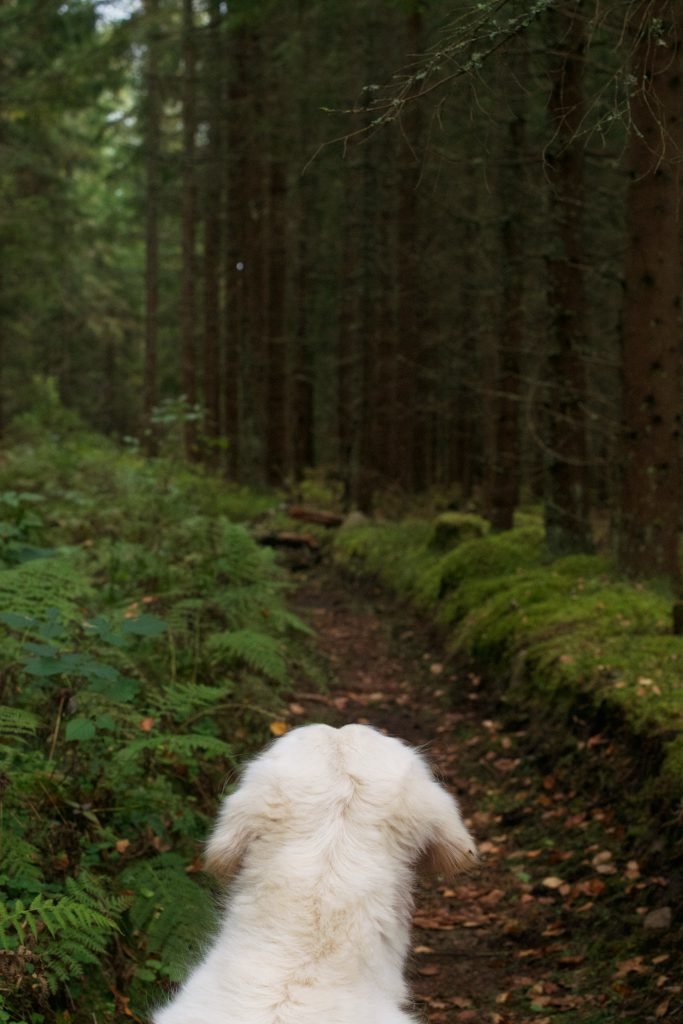 Dog in the forrest | Hungry Heart